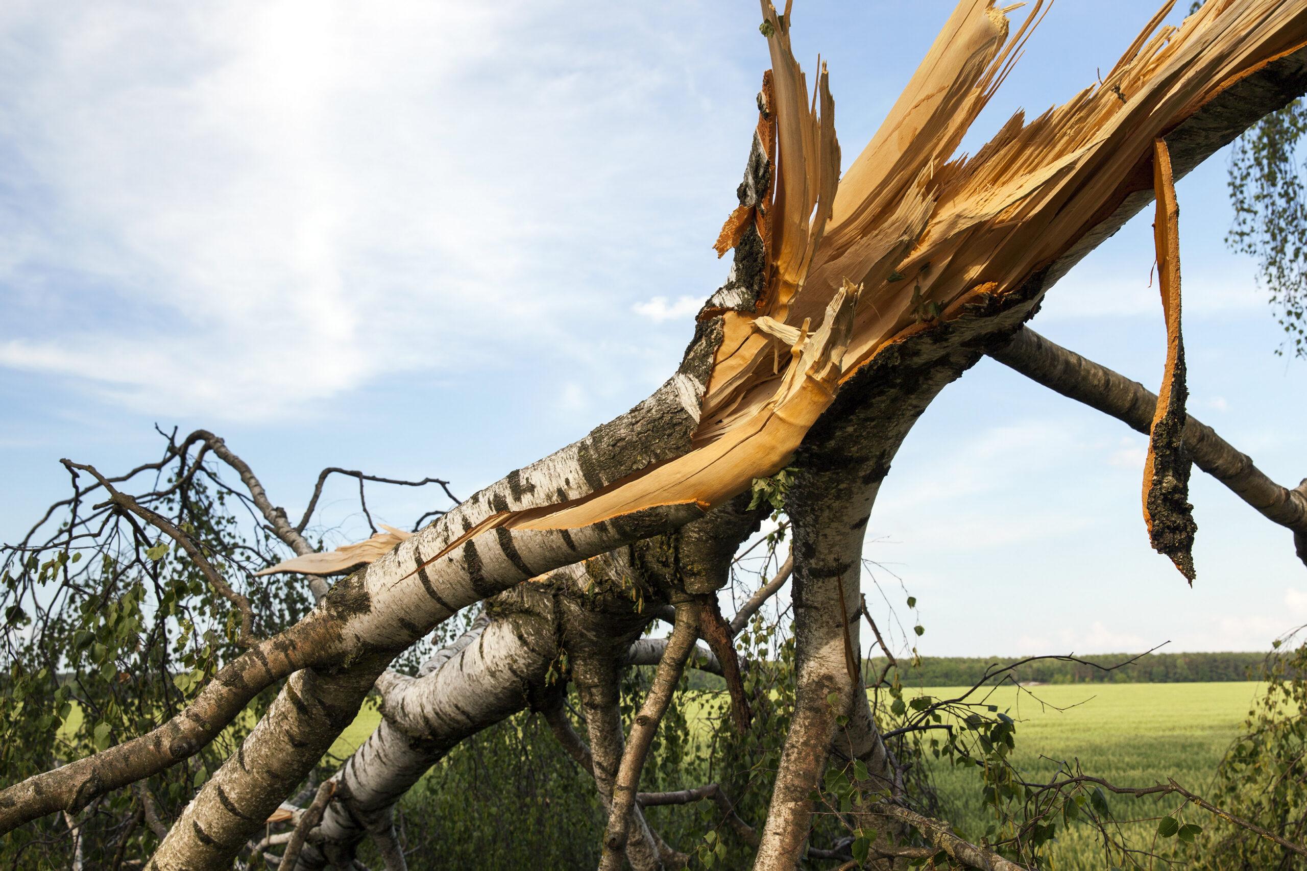 weathered wood broken